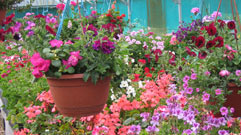 Expertise with hanging baskets